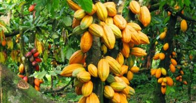 THE NPP IS RESPONSIBLE FOR OUR SUCCESS STORIES IN THE COCOA SECTOR